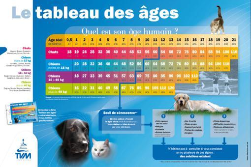 age des chats