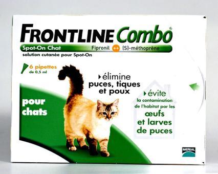 anti tique chat
