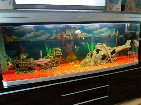 aquarium 500 litres