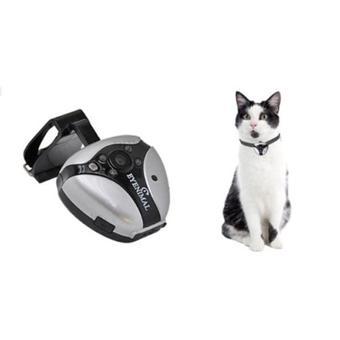 caméra chat