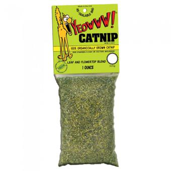 catnip chat