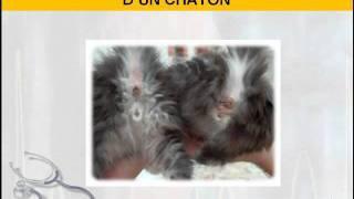 chaton male ou femelle