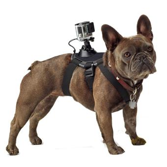chien accessoire