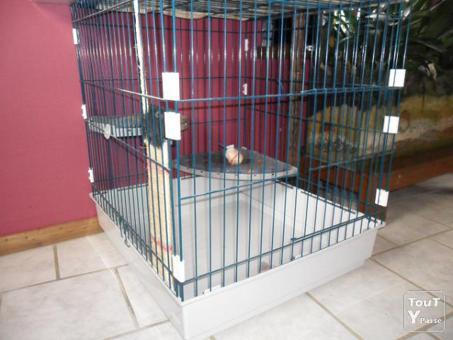 grande cage pour chat
