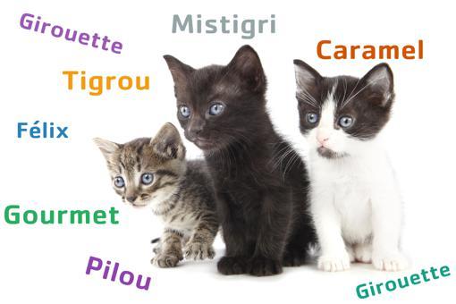 nom de chat original et court