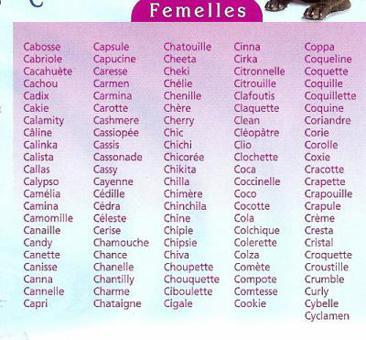 prenom de chat