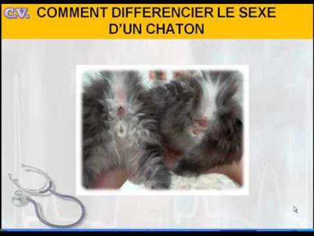 sexe d un chaton