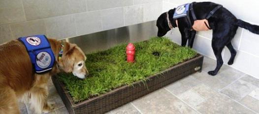 toilette pour chien